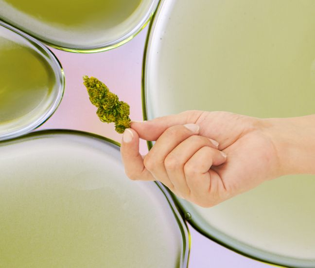 hand holding marijuana flower